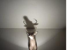 deerhead2.jpg