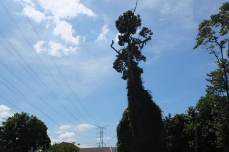 KL13_tree